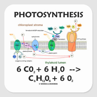 Fotosíntesis (fórmula química) pegatina cuadrada