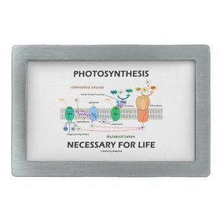 Fotosíntesis necesaria para la vida dependiente de hebillas cinturon rectangulares