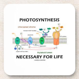 Fotosíntesis necesaria para la vida dependiente de posavasos