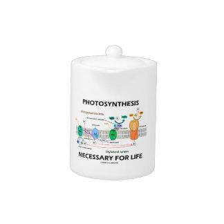 Fotosíntesis necesaria para la vida dependiente de