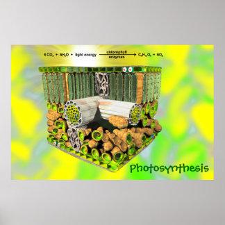 Fotosíntesis Poster