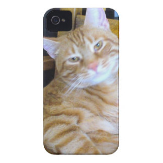 Found Feline Tabby Cat Happy Healthy Spoiled iPhone 4 Case-Mate Cases