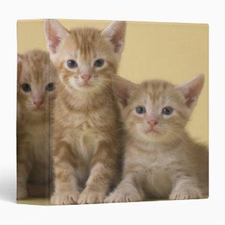 Four American Shorthair Kittens Vinyl Binder