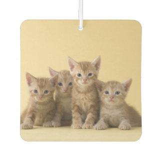 Four American Shorthair Kittens Car Air Freshener