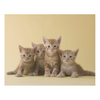 Four American Shorthair Kittens Panel Wall Art