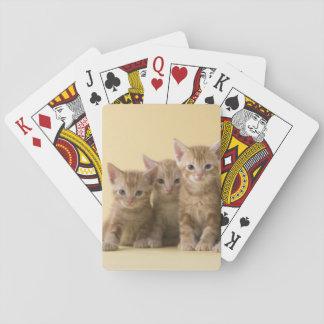 Four American Shorthair Kittens Poker Cards