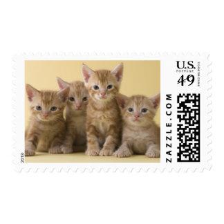 Four American Shorthair Kittens Postage