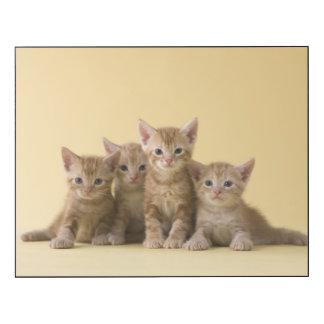 Four American Shorthair Kittens Wood Wall Art