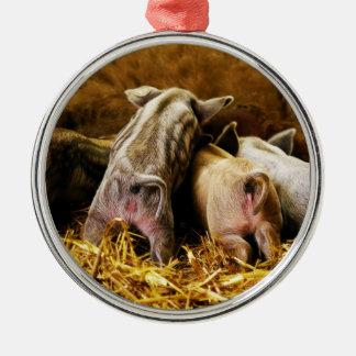 Four Baby Piglet Mangalitsa Hogs Showing Butts Metal Ornament