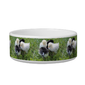 Four Black and Yellow Baby Chicken chicks Bowl