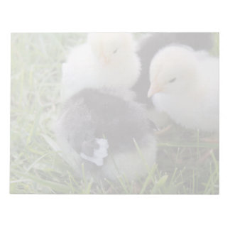 Four Black and Yellow Baby Chicken chicks Notepad