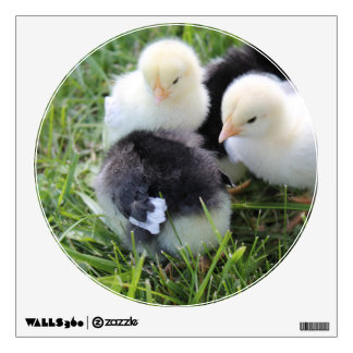 Four Black and Yellow Baby Chicken chicks Wall Sticker