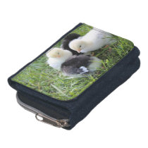 Four Black and Yellow Baby Chicken chicks Wallet