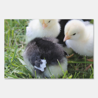 Four Black and Yellow Baby Chicken chicks Yard Sign