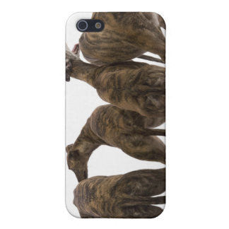 Four brindle greyhounds iPhone case Cover For iPhone 5