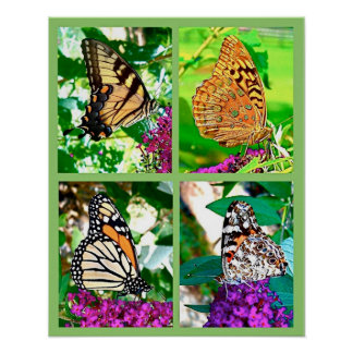 """Four Butterflies Photo Collage 16"""" x 20"""" Poster"""