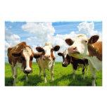 Four chatting cows foto print