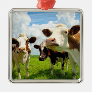 Four chatting cows. christmas ornaments