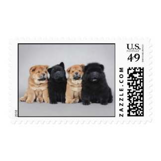 Four Chow chow puppies Postage