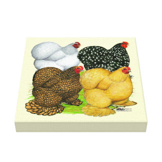 Four Cochin Hens Canvas Print