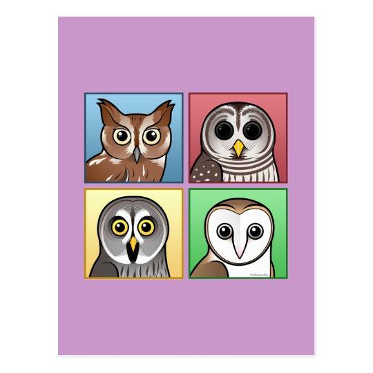 Four Color Owls (pastel) Postcard