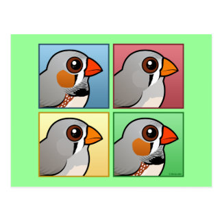 Four Color Zebra Finch Postcard