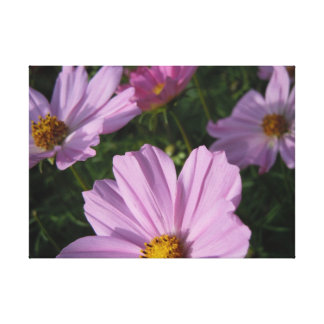 Four Cosmos Canvas Print