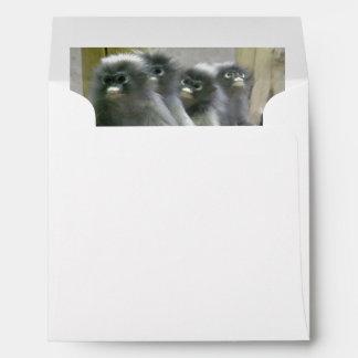 Four Cute and Inquisitive Dusky Leaf Monkeys Envelope