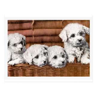 """""""Four Cute Puppies"""" Vintage Dogs Postcard"""