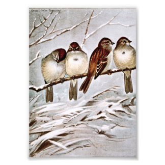 Four Cute Tree Sparrows Art Photo