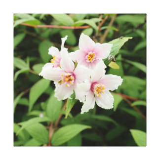 Four Deutzia Discolor Flowers Canvas Print
