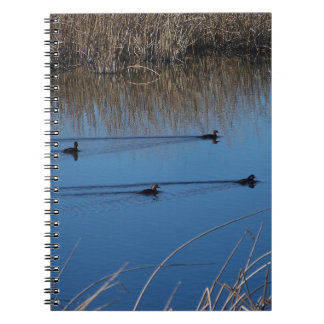 Four Ducks Notebook