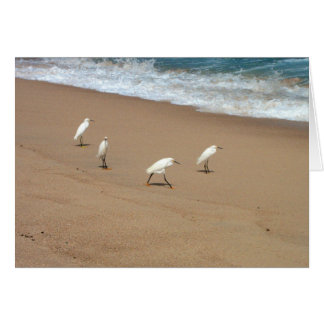 Four Egrets Card
