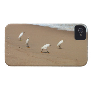 Four Egrets iPhone 4 Case-Mate Case