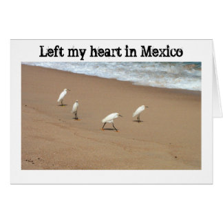 Four Egrets; Mexico Souvenir Card
