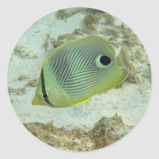 Four-eyed Butterfly fish Classic Round Sticker