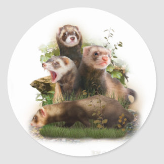 Four Ferrets in Their Wild Habitat Classic Round Sticker