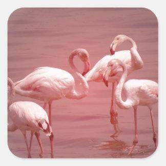 Four Flocking Flamingos Square Sticker