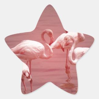 Four Flocking Flamingos Star Sticker