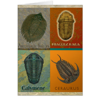 Four Fossil Trilobites Card