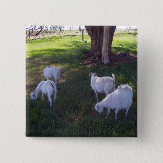 Four Goats Button