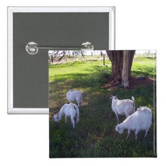 Four Goats Button