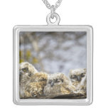Four Great Horned Owl (Bubo Virginianus) Chicks Silver Plated Necklace