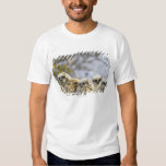 Four Great Horned Owl (Bubo Virginianus) Chicks T Shirt