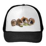 four guinea pigs who eat, gorras