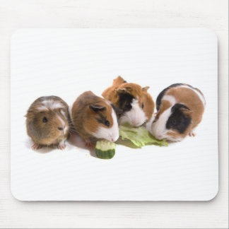 four guinea pigs who eat tapis de souris