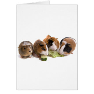 four guinea pigs who eat, tarjeta de felicitación
