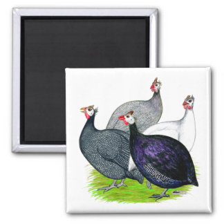 Four Guineas 2 Inch Square Magnet