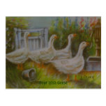Four Irish Geese Pastel Drawing by Joanne Casey -  Postcard