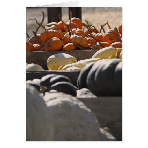 Four Kinds of Gourds Stationery Note Card